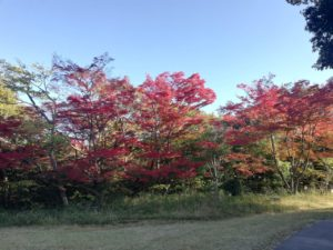 愛知県森林公園の植物園