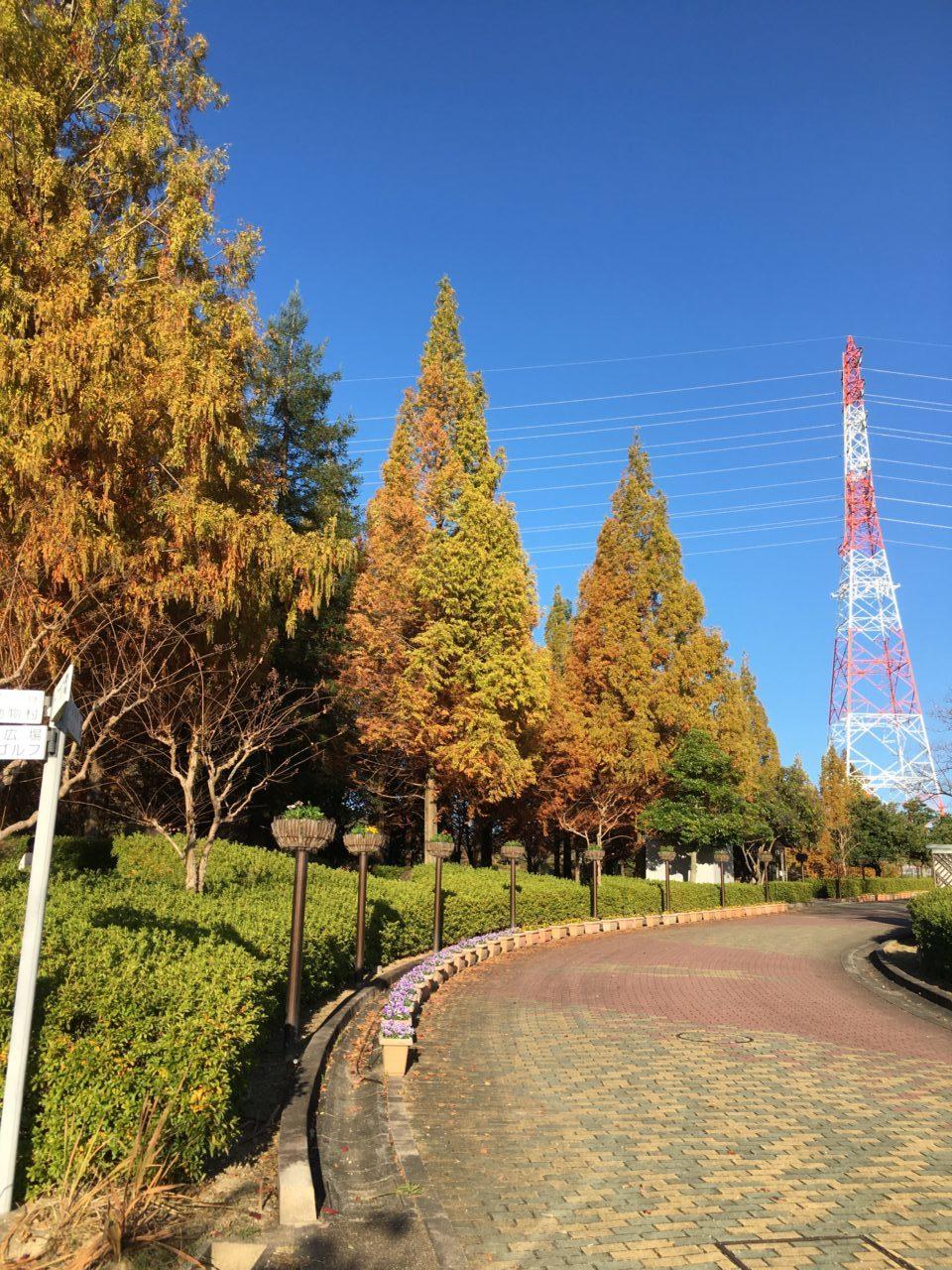 市民四季の森(公園)