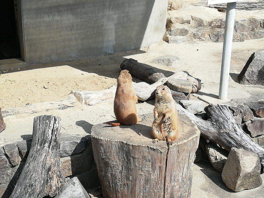 岡崎市東公園動物園